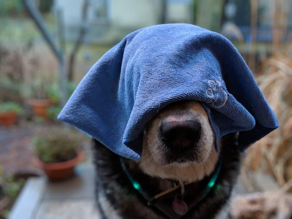 Mein Hund mit Hundehandtuch